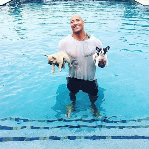 The Rock and his two new French Bulldog Puppies