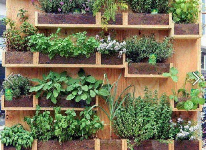 Green wall, herb garden vertical garden