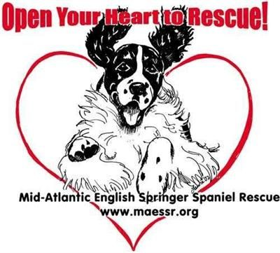 Mid Atlantic English Springer Spaniel Rescue - Powered by Network Solutions.