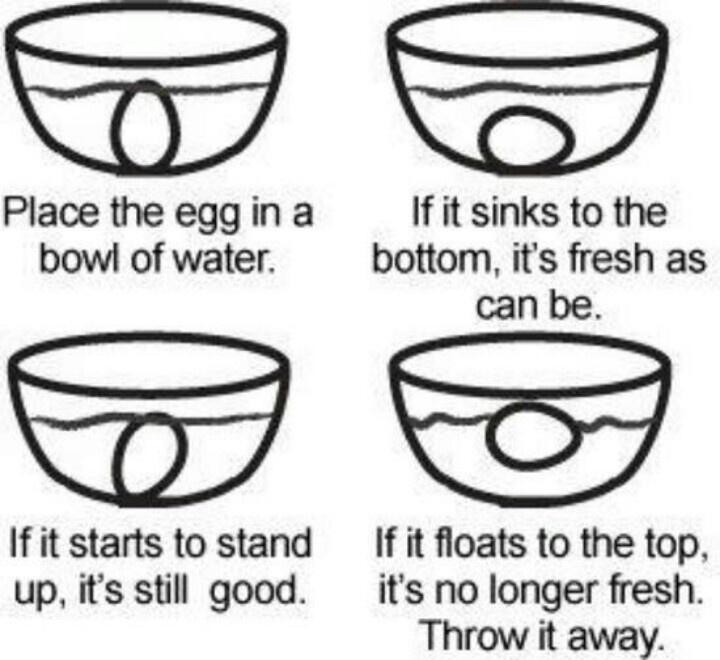 1000+ images about Egg Facts on Pinterest | Egg egg egg, Egg facts ...