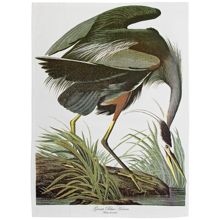 Audubon Great Blue Heron tea towel  | Natural History Museum Online Shop