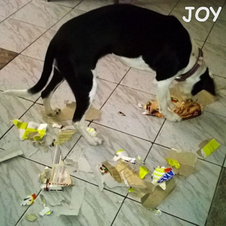 Recycling time JOY's way. lol 🐾🐾🐶 Follow JOY at her Facebook page for many more photos and videos:  https://www.facebook.com/JOYMixedBreedGirl/  #dog #instagramdogs #ilovemydog #instapuppy #dogfamily #doggie #ilovemypet #dogofinstagram #happydog #dogface #dogsofig #dogselfie #doglovers #dogsofinstaworld #petstagram #doglover  #petlover #instadog #dailypawwoof #happydog_feature #dogsubmit