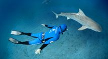 A fantastic experience: swimming with sharks in South Africa
