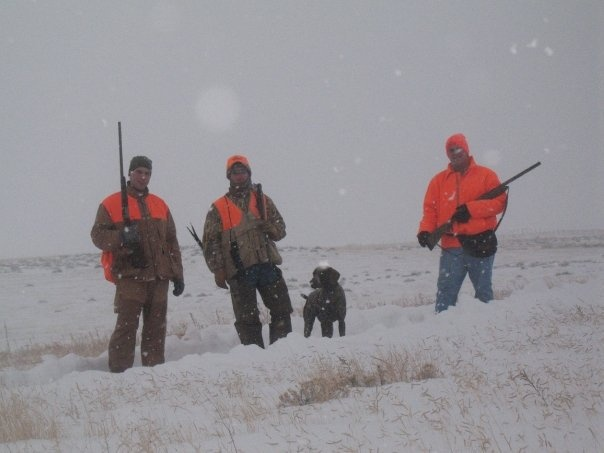 Pheasant hunting in Colorado. Although the snow was sometimes up to ...