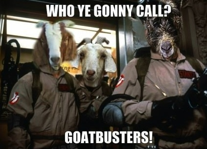 Goatbusters!