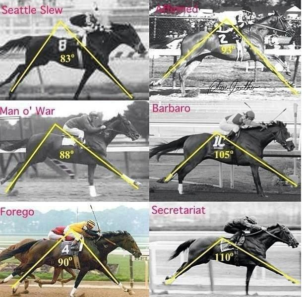 259 Best Racehorses Images On Pinterest Horse Racing