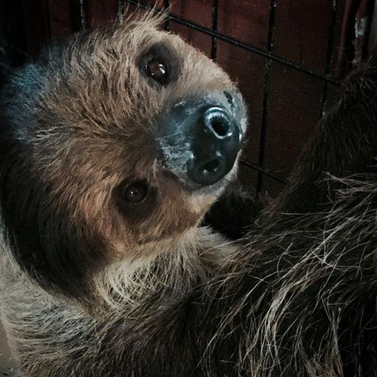 Sloth, Koala Bear, Brown Bear