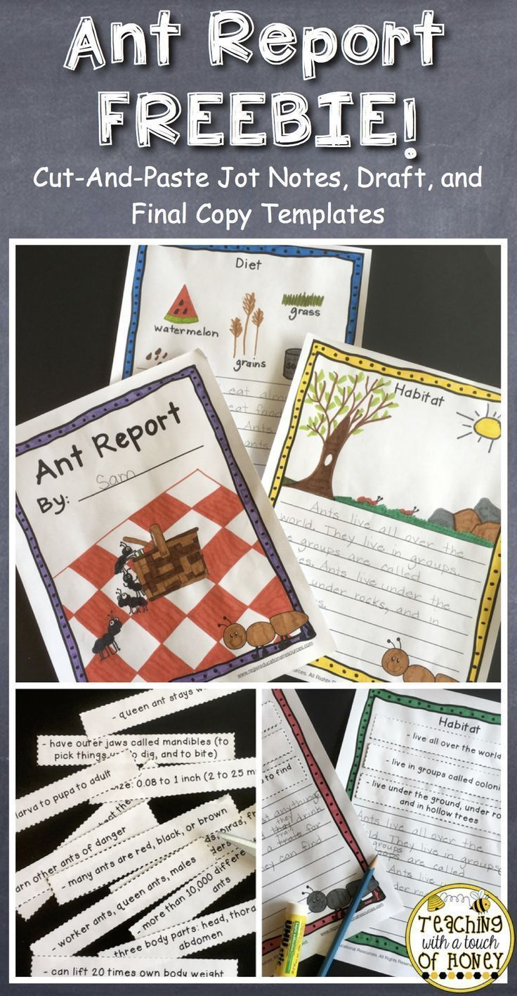 Support your students with their report writing as they write an insect report about ants with this FREEBIE! Cut-and-paste jot notes are provided along with draft and final copy templates. Check it out! #reportwriting #teachingwithatouchofhoney