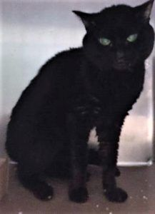 ***TO BE DESTROYED 10/07/17*** BRAVE BLACK USED TO