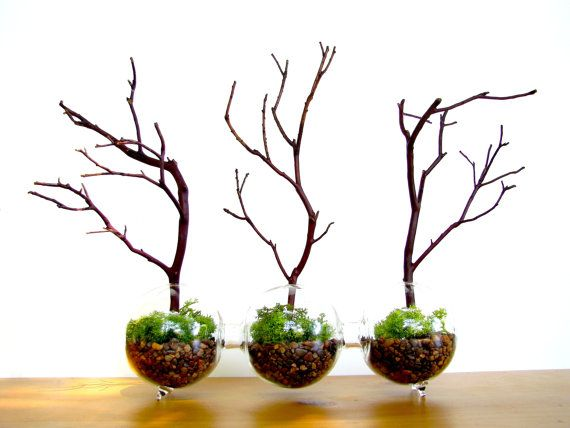 So unique, your own little Manzanita forest!! A completely carefree terrarium! These three attached glass globes are planted with polished gravel, bright green preserved moss and little Manzanita trees. No water or light needed. Bring some eye-catching nature into your home. Perfect for the office, no maintenance to worry about.