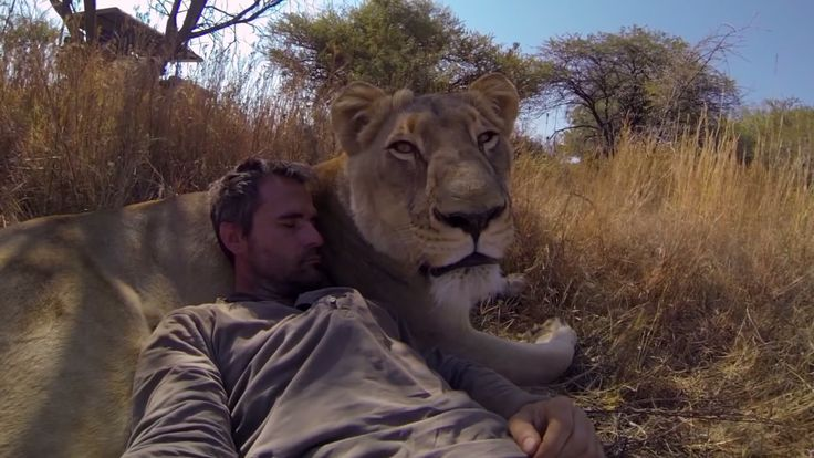 "Kevin Richardson has a unique relationship with these lions of the South African Savanna.  ""As you hear him call for these animals and then watch them charge after him (...) these gigantic lions wrap their paws around him and give him the most adorable hug you'll ever see in your life.""  Photos & Video!"