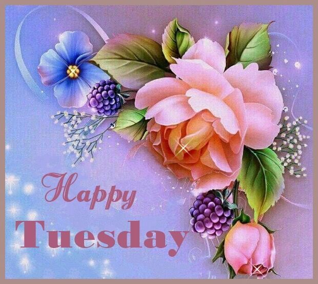 Happy Tuesday  tuesday tuesday quotes happy tuesday tuesday images tuesday quote images