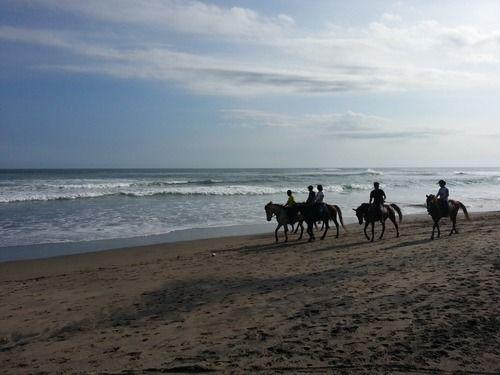 Лошадь – самое красивое животное на земле. Ее грация и мощь производит неизгладимое впечатление. Поэтому, приехав на Бали, стоит воспользоваться такой великолепной возможностью прокатиться по рисовым полям и вдоль песчаного побережья. Остров Бали откроется вам с другой стороны. Все вокруг очарует вас и окунет в сказочный мир.