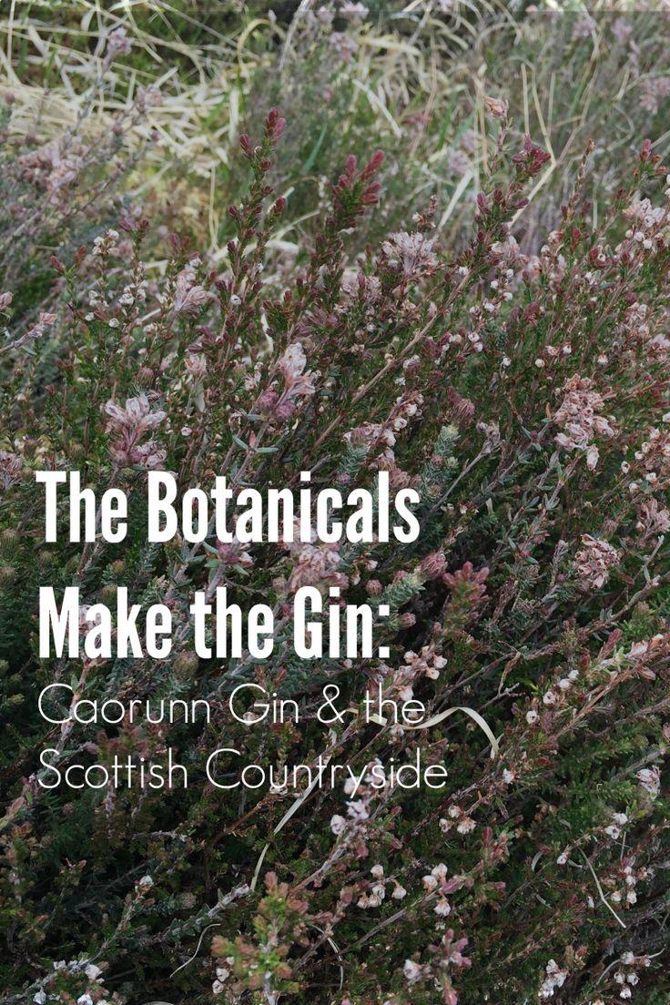 The Botanicals Make the Gin: Caorunn Gin & the Scottish Countryside We're celebrating World Gin day by telling the story of the botanicals in Caorunn Gin.