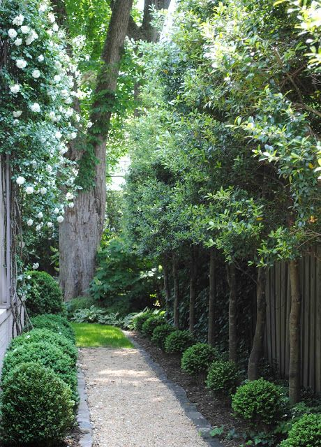 Love the gravel path and tall, slender trees for a side yard