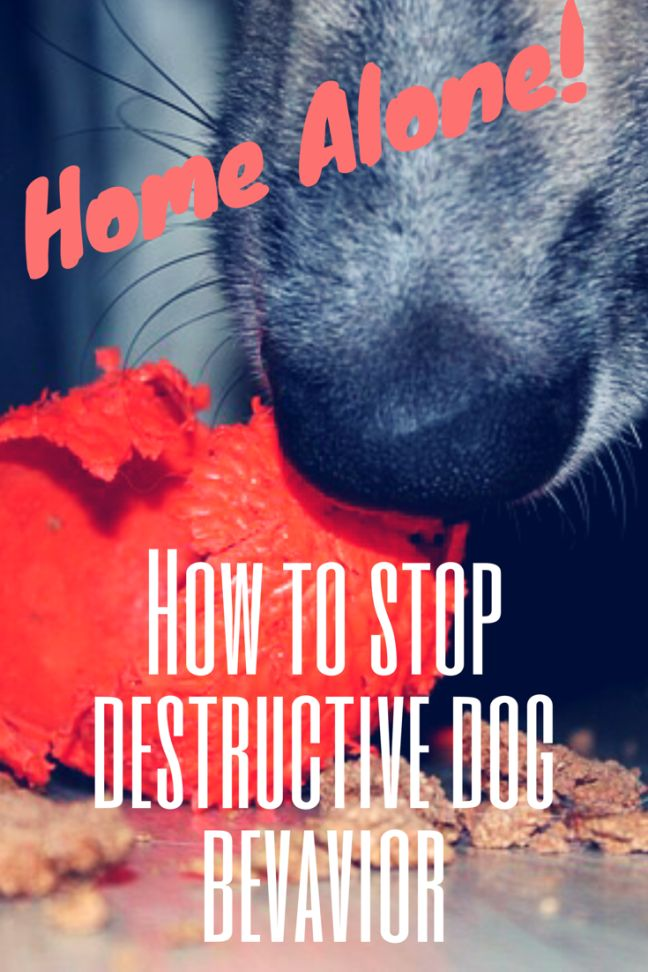 How to Stop Your Dog from Destroying Your House. Putting an end to destructive dog behavior is easier than you think.