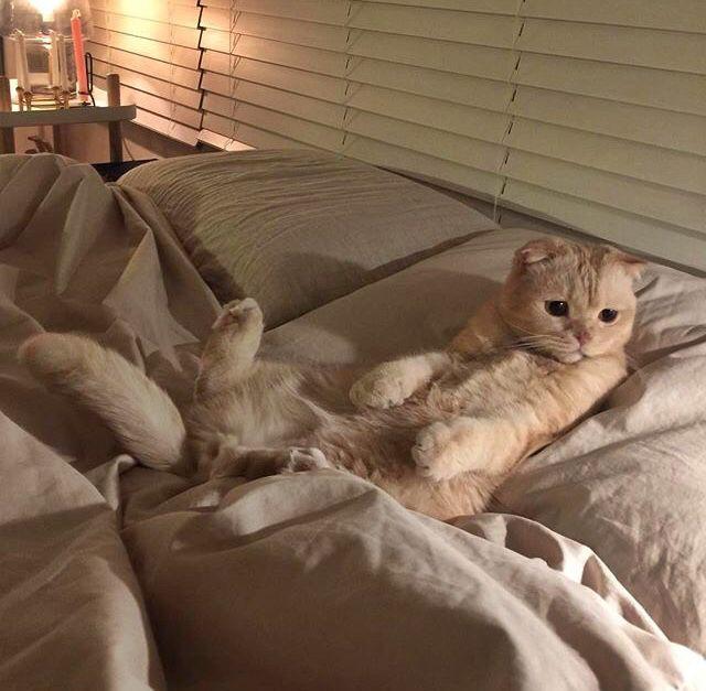 F L O R E N S แมวน อย ส ตว เล ยง ล กแมว