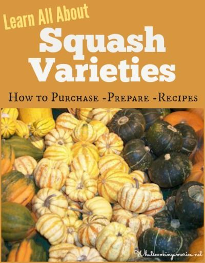 Learn All About Squash Varieties - How to Purchase, Prepare & Recipes!  |  whatscookingamerica.net  |  #sqash #winter #summer