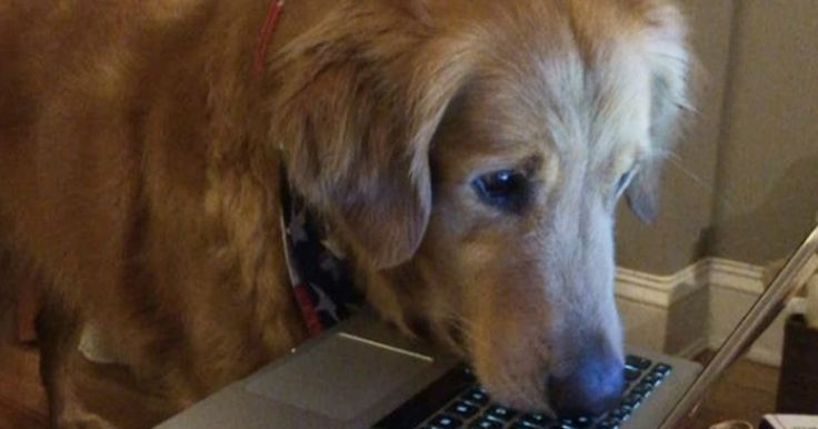 #HTE Captivated dog cant keep his eyes off this squirrel video This pup clearly has his priorities straight.