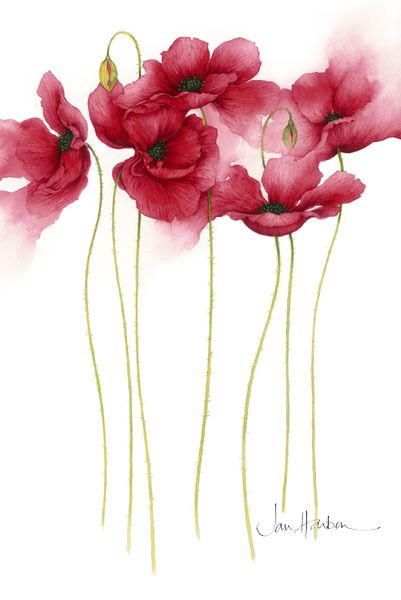 Anemones. A beautiful watercolor.....like