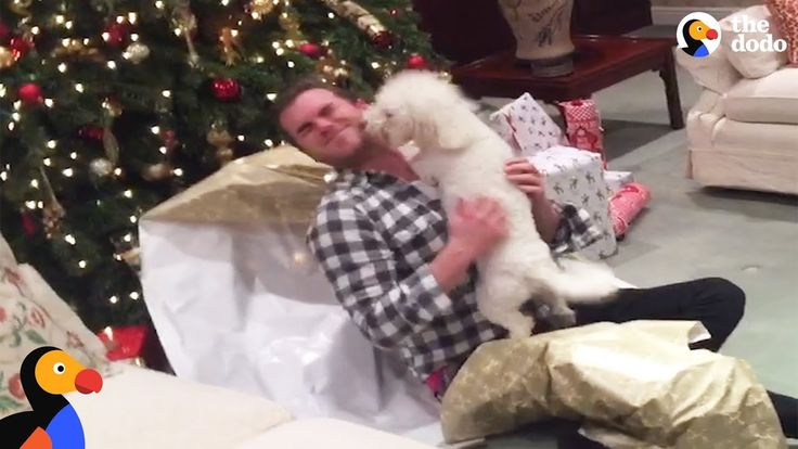 Good Dogs Opening Christmas Presents | The Dodo