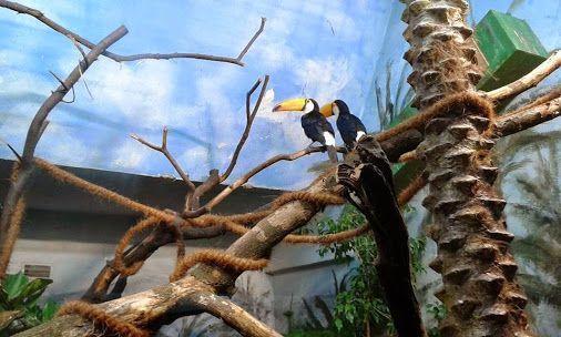 "Ptaki, ""prawie"" jak u Hitchcocka. #tukan, #Ramphastos"