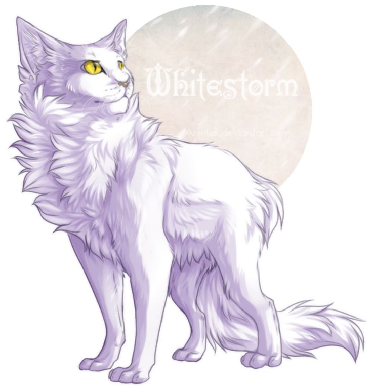 Whitestorm i love you why did you desvere a horrible live it hurts me sooooooooooooooooooooooooooooo much