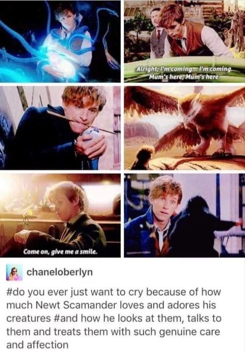 I want a guy to look at me like Newt Scamander looks at his creatures.