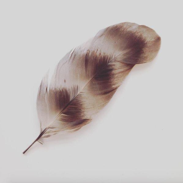 #feather #details #texture
