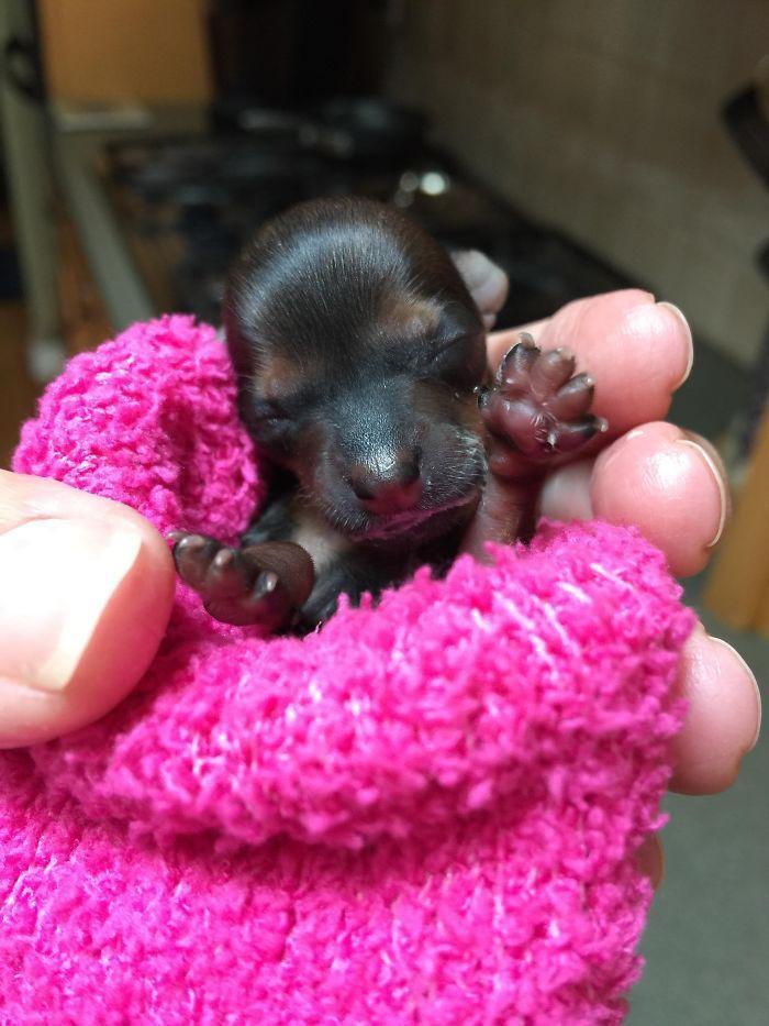 Newborn Yorkie Puppy My Mom Took In A Pregnant Puppy Mill Rescue