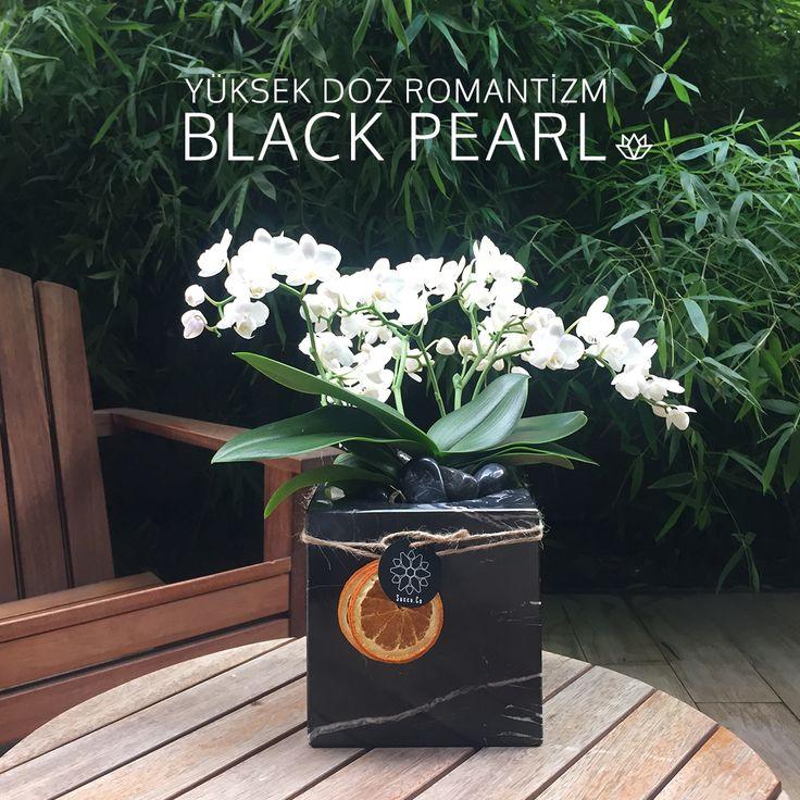 Vazgeçilmez beyaz orkidenin büyüleyici siluetine siyah mermer eşlik ediyor. Black Pearl, şaşırtıcı güzelliğiyle yaşam alanlarınızın favorisi olmaya hazır.