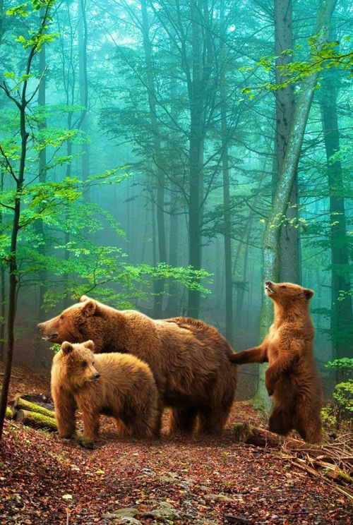 i love this picture, it's full of beautiful colors and the animals are a perfect extra.