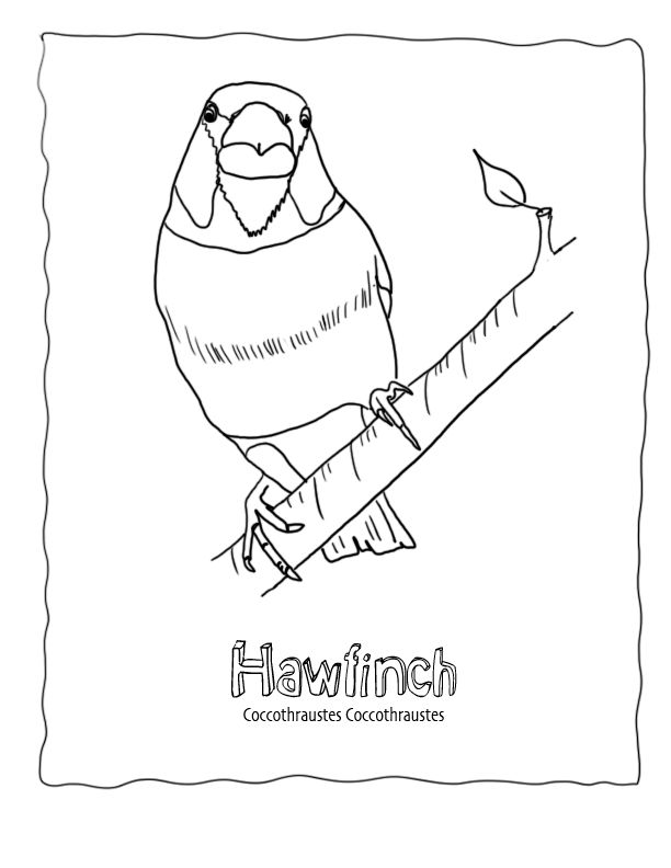 bird watching coloring pages - photo#28