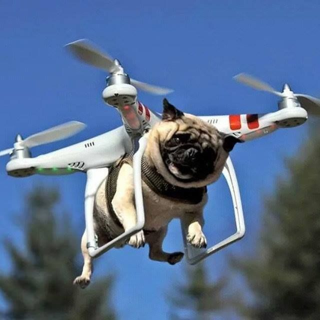 New feature for the Phantom 3 drone! Dogs can now be delivered by drones. #Joke #Humor #Pugs #Puppies