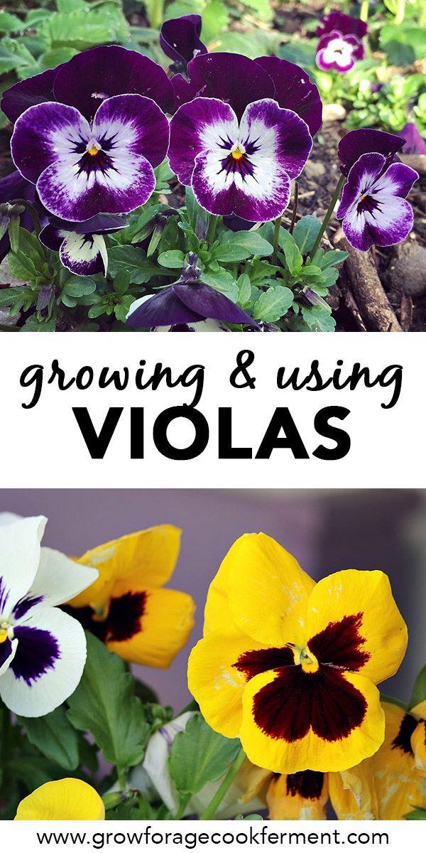 Sweet Viola Bath Soak Recipe Edible Flowers Pansies Herbal Magic