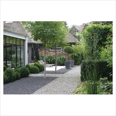 Paved area in suburban garden with Rhododendron 'Cunninghams White' and topiary in planters