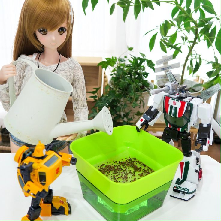 """""""#smartdoll #transformers ホームセンターで、つい、『スプラウト(新芽🌱)栽培キット』を購入! 種を蒔き、水をやって育てれば、1Week〜10Daysで、新鮮お野菜が食べられる!(はずっ!) (╹◡╹)"""""""