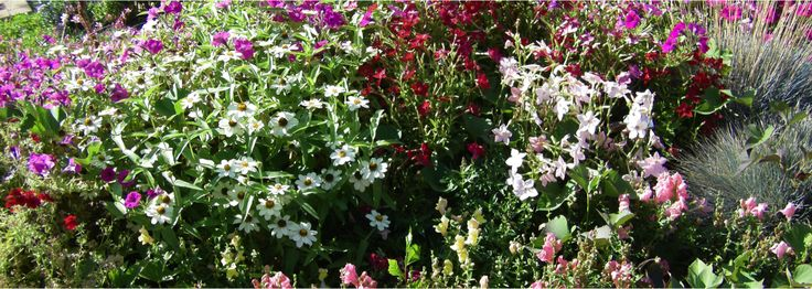 annuals vs. perennials  The overall definition of a perennial is a plant that regrows from a root stock that ...  Read More at thebestgardening.com/annuals-vs-perennials/ © The Best Gardening