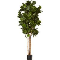 Features:  -Fiddle-Leaf Fig collection.  -This plant will make you happy.  -Add a bright spot to any room.  -Makes a beautiful and lasting gift.  -Scalloped rope basket with Spanish moss.  -Made in th #MajesticVision