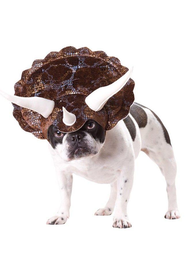 Funny Dog Costumes http://ift.tt/2k6v57Y