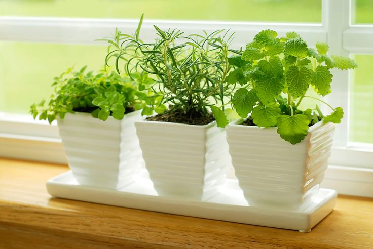 Gardening Tips to Grow On Everyone can heartily agree that a garden is good for the soul and good for your dinner plate too! Especially when you indulge in an herb garden whether it's of the window-sill variety or one that fills your backyard garden.