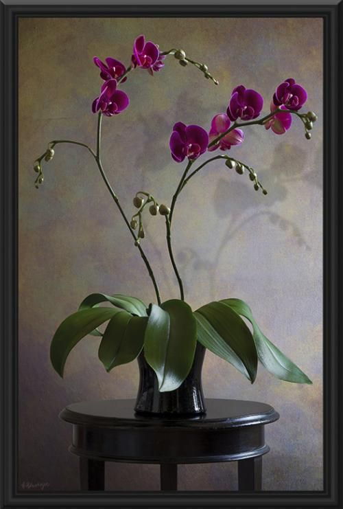 Still Life Flower Painting Orchids Painting Flower Art