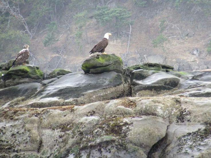More eagles