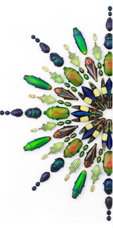 "Artist Christopher Marley - ""Pheromone"""