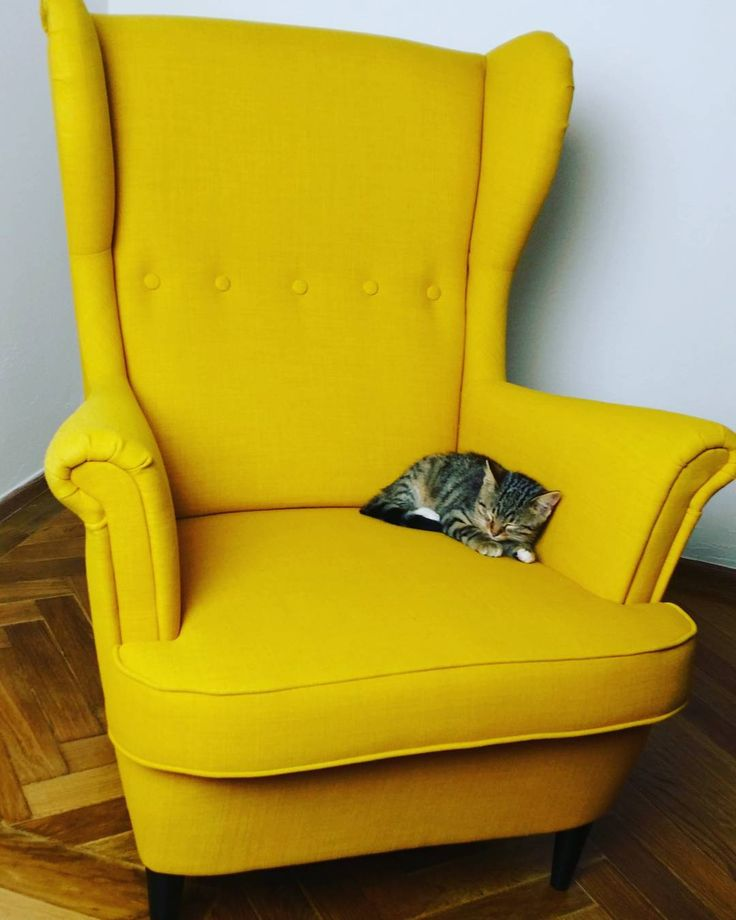 Yellow armchair with a kitty. Must have at your flat - classic armchair in totally unusual yellow color and the kitty on it.  #kitty #yellow #armchair #wingchair