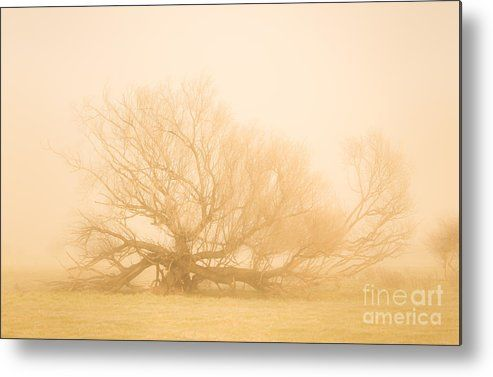 Haunting Metal Print featuring the photograph Scary Tree Scenes by Jorgo Photography - Wall Art Gallery