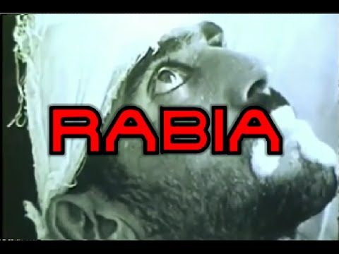 28 de septiembre – Día Mundial de la Rabia #DíasInternacionales ~ Rdn24.com - Red de Noticias 24