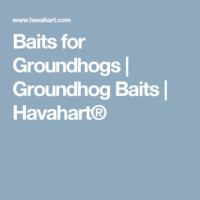 Baits for Groundhogs | Groundhog Baits | Havahart®