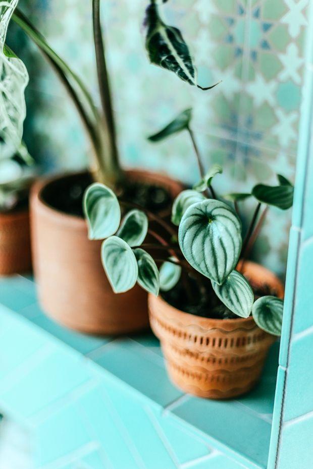 stylist design house plant seeds. Bathroom Before and After with Kohler  House PlantsBathroom 317 best plants images on Pinterest Interior decorating