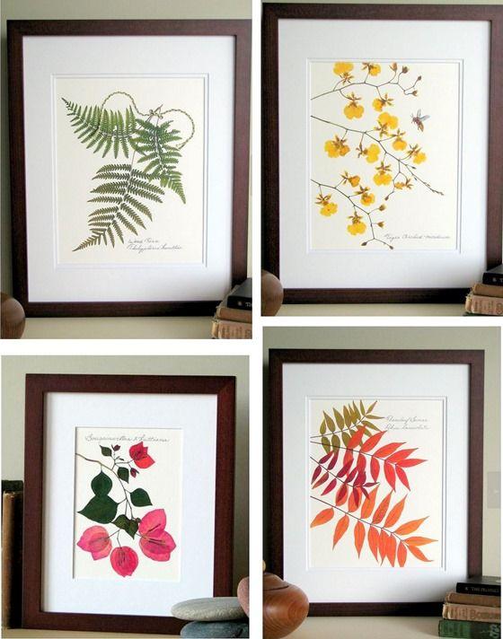 impresiones de hojas prensadas diseños florales planas